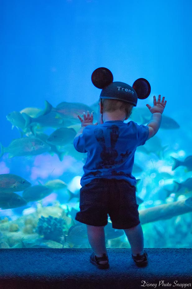 A little boy watching the fish at The Seas with Nemo and Friends