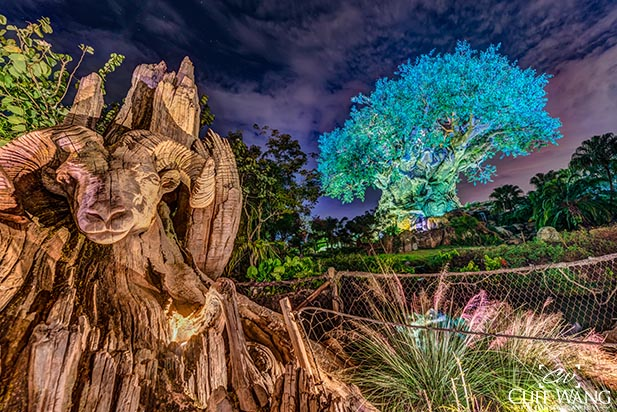 Animal Kingdom has become a really cool place after dark
