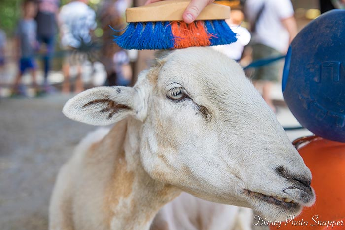 Petting a goat at Rafiki's Planet Watch